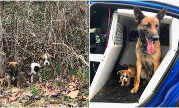 Tekas išgelbsti šunelius