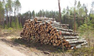 Kertant medžius lietuviams pritrūksta racionalumo?