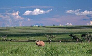 Garambos nacionalinis parkas, Kongas