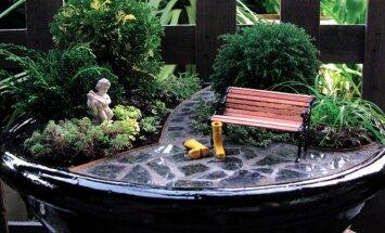 Miniatiūrinis kraštovaizdis vazonėlyje