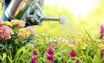 Augalai, kurie jūsų gėlyną pavers išskirtiniu