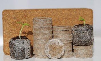 Kokoso plaušo daiginimo tabletės: kuo jos naudingos?