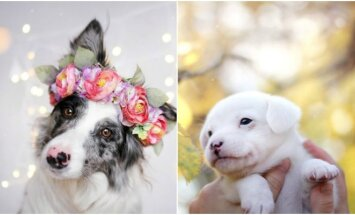 Šunų fotosesija