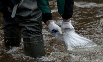Į upę paleidžiami šlakiai