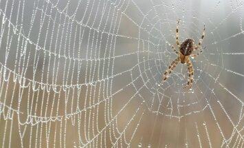 Vorų nuodai gali suteikti viltį insultą patyrusiems žmonėms