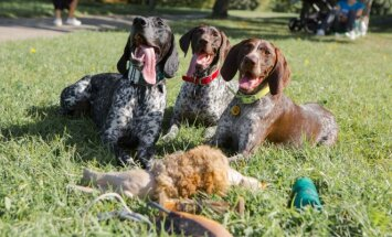 Fotografės Miglės šunys