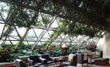 Žalioji oazė mieste: kaip ir kodėl augalais puošiamos namų sienos
