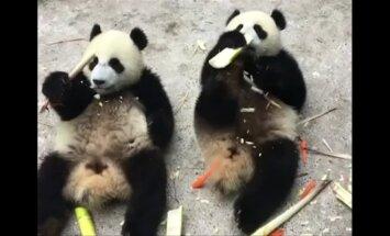 """""""Slaptas pandų gyvenimas"""" (64 serija): dviejų sesučių nuotykiai naujoje žaidimų aikštelėje"""