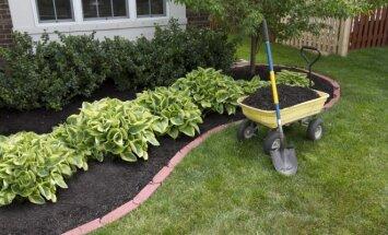 Patarimai, kaip geriausia mulčiuoti augalus