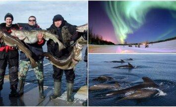Žvejyba Norvegijoje