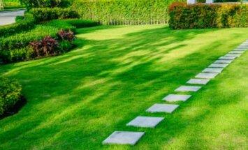 Kiek kainuoja įsirengti veją?