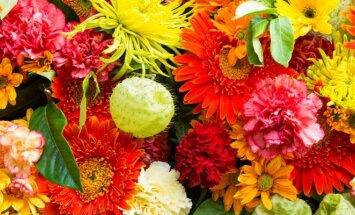 Kas labiausiai tinka Jūsų namams: gėlės zodiako ženklams