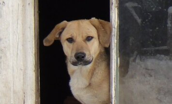 Šuniukas
