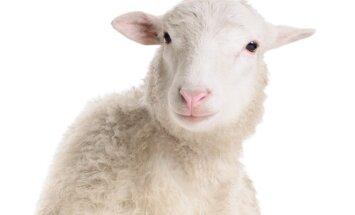 Fengšui prognozė 2015-iesiems – kaip pritraukti sėkmę į namus medinės avies metais