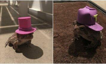 Rupūžė dėvi kepuraites