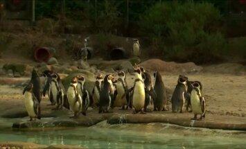 Londono zoologijos sode – tradicinė gyventojų inventorizacija