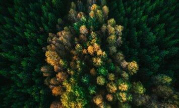 Paskirtas laikinasis būsimos Lietuvos miškų urėdijos vadovas