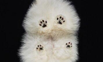 Fotografo A.Burbos projektas - gyvūnų fotografavimas iš po stiklo