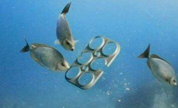 Žiedai, kurie būtų tinkami gyvūnams ėsti