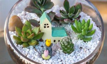 Miniatiūrinis sodas bute