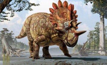Regaliceratops peterhewsi (Karališkojo Tyrell muziejaus iliustr.)