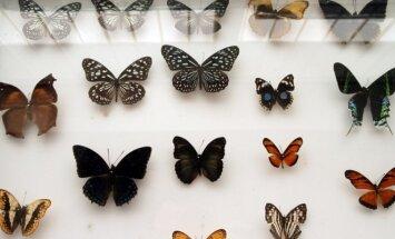 Egzotinių gyvūnų konferencija - drugelių kolekcija