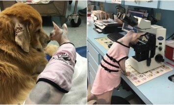Katė įsidarbino veterinarijos klinikoje