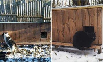 Kačių namai