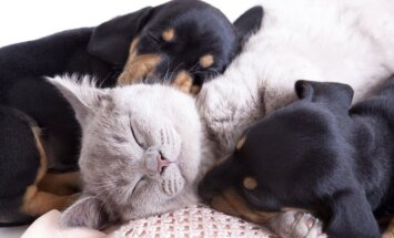 Katinas su draugais