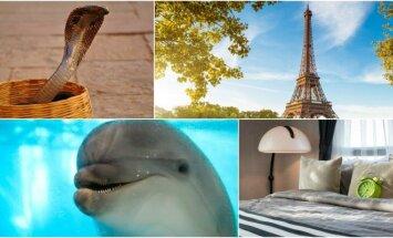 Kobra, Eifelio bokštas, delfinas, pagalvė