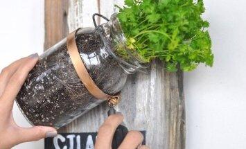 """<span style=""""color: #ff0000;"""">Pasidaryk pats:</span> prieskoninių augalų auginimas ant sienos"""