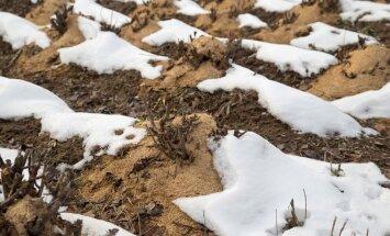 Pasiruošimas pavasariui - vasario mėnesio darbai sode