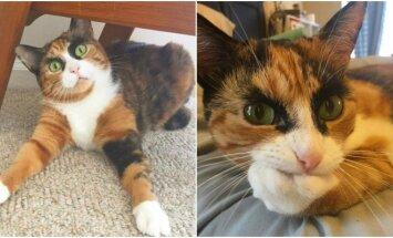 Katė Lilė