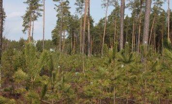 Jauni medžiai miške