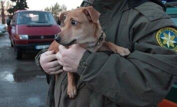 Aplinkosaugininkų priglaustas šuo