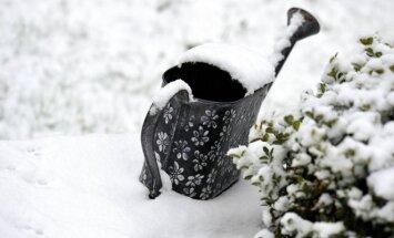 5 patarimai, kaip apsaugoti augalus žiemą