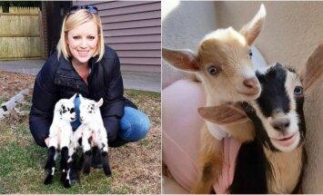 Darbą iškeitė į ožkų priežiūrą