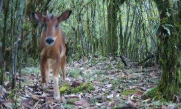 Pietvakarių Kinijoje pastebėtas itin retas gyvūnas