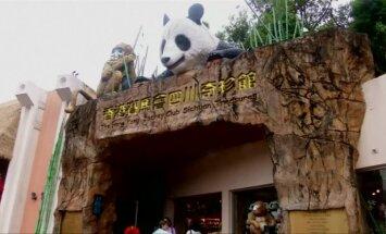 Honkonge užmigdyta seniausia pasaulyje nelaisvėje gyvenusi panda