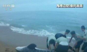 Kinų pakrantės apsaugos pareigūnai išgelbėjo į krantą išmestą bangininį ryklį