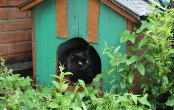 Kačių namelis daugiabučio kieme: kaip jį įrengti teisėtai?