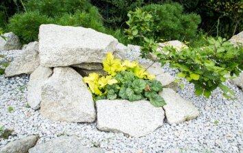 Alpinariumo įrengimas: akmenys ir jų kompozicijos pagrindai