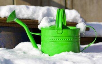 Kur žiemoja sodo ir daržo kenkėjai ir kaip jų atsikratyti?