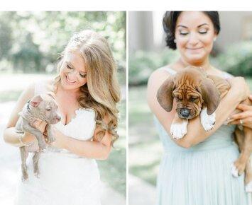 Nuotaka gėlių puokštes per savo vestuves išmainė į šuniukus