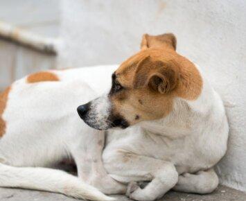 Patarimai, kaip šunį išgelbėti nuo baisaus skausmo