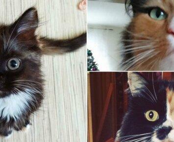 """""""Dviveidžių"""" kačių <em>virusas</em> feisbuke: dalijamasi retos išvaizdos kačių nuotraukomis"""