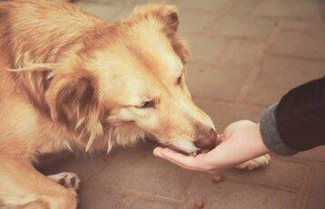 Taivanas rodo pavyzdį: šalyje uždrausta šunų ir kačių mėsa