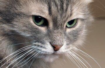 Katė pradėjo tuštintis ne vietoje: ką daryti?