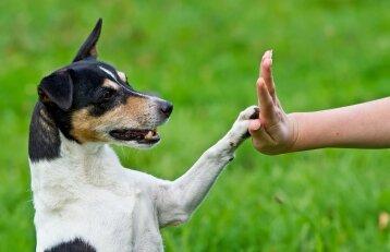 """Beglobiai gyvūnai naujų šeimininkų ieško pažinčių programėlėje """"Tinder"""""""