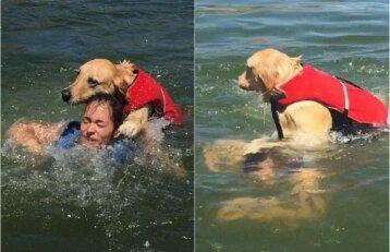 Komiška situacija ežere: atrodo, kad šuo bando nuskandinti šeimininkę